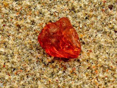 Amber Seaside Tour in Klaipeda